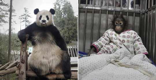 """实拍动物园体检中的""""囧表情""""图片"""